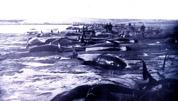 イルカやクジラなど海洋生物の大量死は天災の前触れではなかった!?米海軍のソナー音や爆発音の影響か?